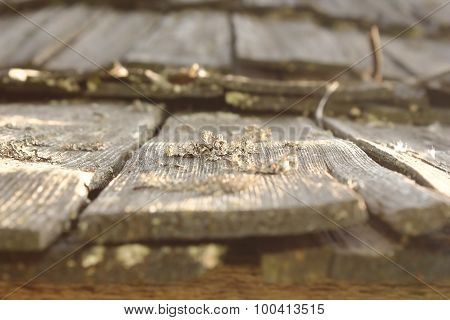Lichens And Fungus On Damaged Wood Roof