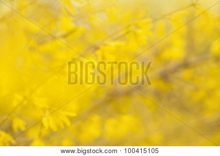 Yellow Leaves Abstract Background