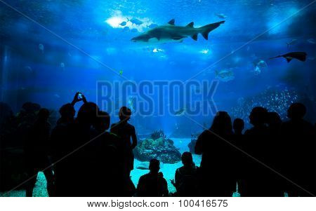 People Looking Marine Life At The Aquarium