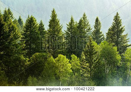 Rain storm in the forest with lush trees representing growth and life