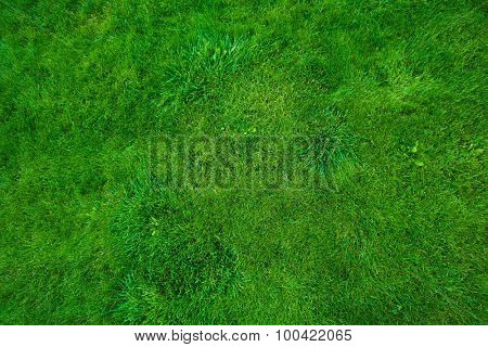 Beautiful fresh green lawn background. Summer garden.
