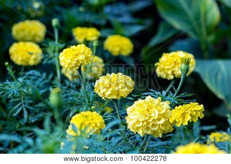 Yellow flowers garden