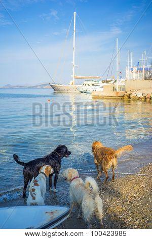 Dogs Playing On Morning Aegean Sea Beach
