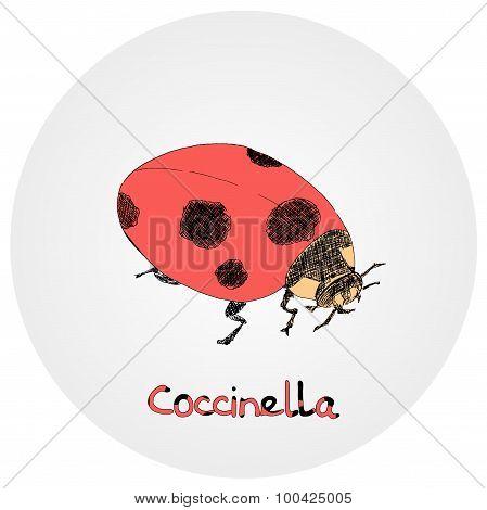 Ladybug (Coccinella) vector sketch