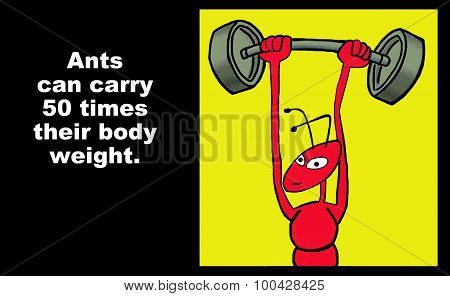 Ants Carry Heavy Weight