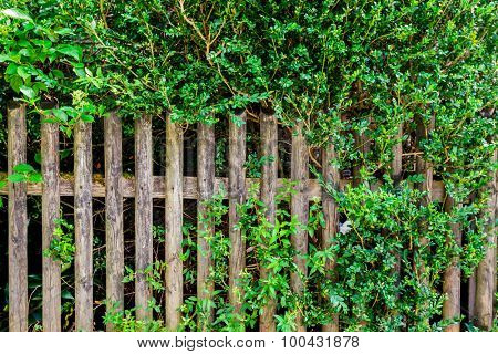 background fence with plants for advertising