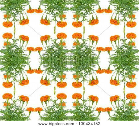 Marigold Seamless Pattern Background