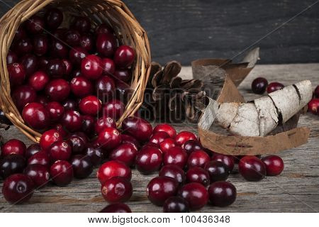 Fresh ripe cranberries spilling out of basket on dark wooden background
