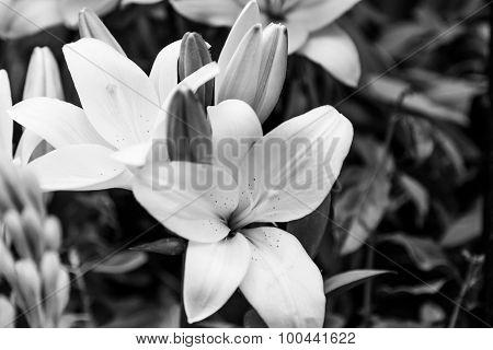 B&w Tropical Flower Closeup