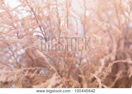 Close Up Of Dry Grass