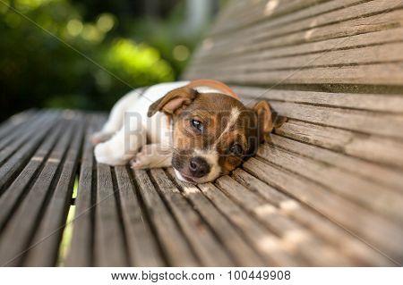 Funny Lazy Puppy