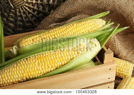 Fresh corn on cobs in wooden crate on sackcloth, closeup