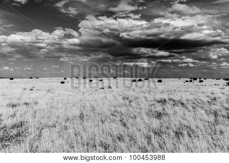 Prairie in Monochrome