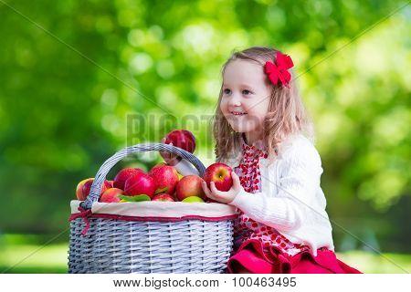 Little Girl Picking Apples In Fruit Orchard