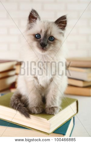 Cute little cat with books on light background