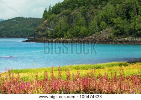 Meadow in Alaska