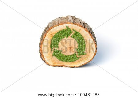 Cross section of tree trunk with recycle symbol, isolated on white background