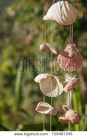 Marine decoration made of sea shells on the thread