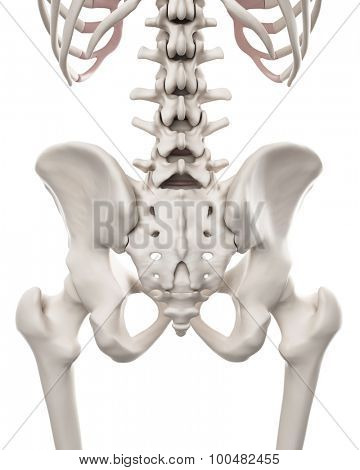 medically accurate illustration of the skeletal system - the hip and lower spine