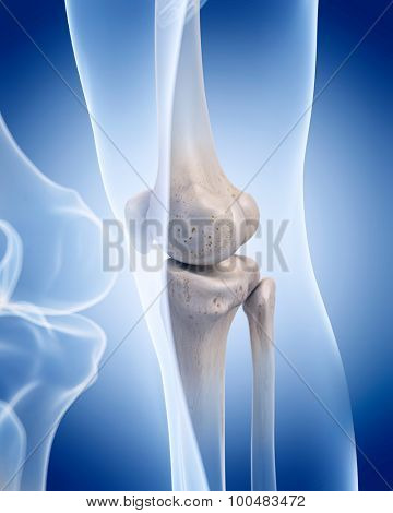 medically accurate illustration of the human skeleton - the knee