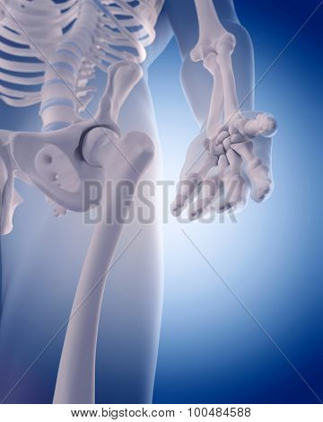 medically accurate illustration - bones of the hand