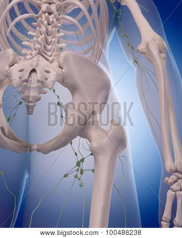 medically accurate illustration of the lymphatic system - the leg