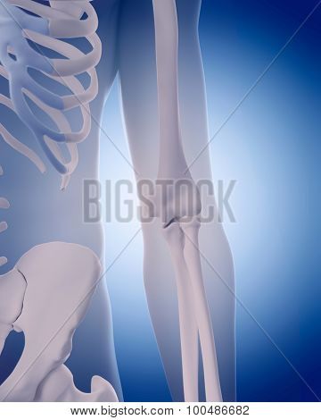 medically accurate illustration - bones of the elbow