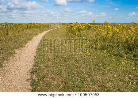 Narrow Path In A Nature Reserve