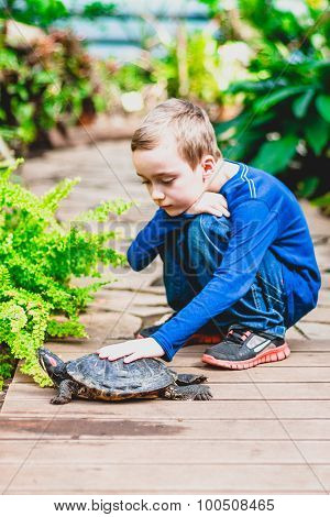 Boy petting a red-eared turtle. Focus on a turtle.