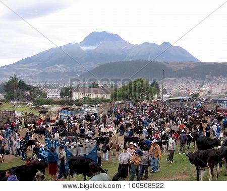 Cattle Market, Otavalo
