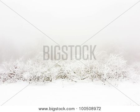 Frozen Plants In The Snow In Front Of A Blizzard