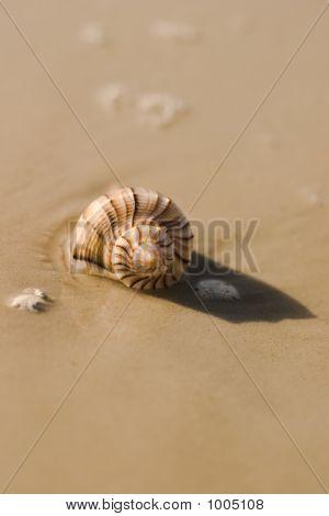 Seashell 6