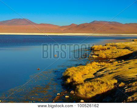 Laguna Colorada in Cordillera de Lipez