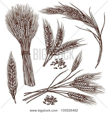Wheat Sketch Set