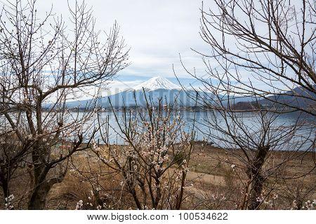 Fuji Lanscape View With A Kawaguchiko Lake