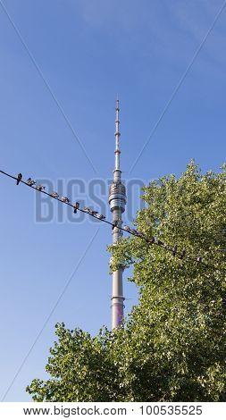 Pigeons In Ostankino