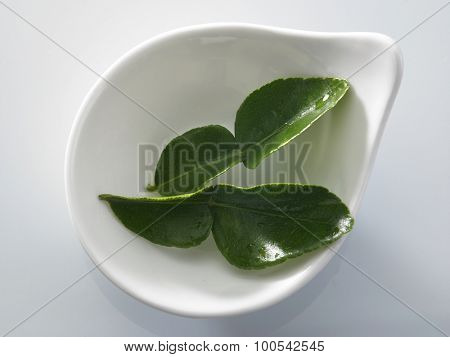 bergamot kaffir lime leaves herb fresh ingredient food asian thailand tom yam