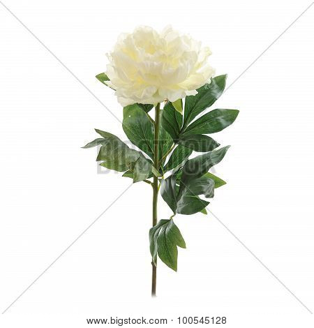white peony flower with stem and leaves