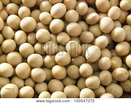 full frame of the soy beans