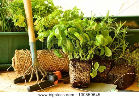 Planting chives, parsley, thyme, rosemarine and basil with gardenning tools.