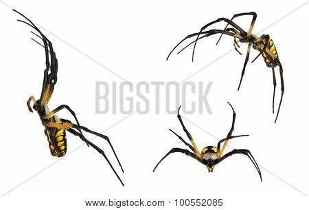 Black And Yellow Spider On White.