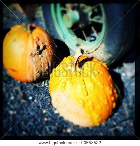 Pumpkins sitting by old tractor wheel - Instagram filter