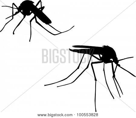 illustration with two mosquito silhouettes isolated on white background