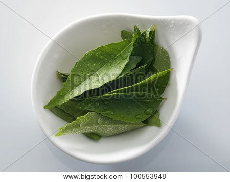 fresh curry leaf with water drop