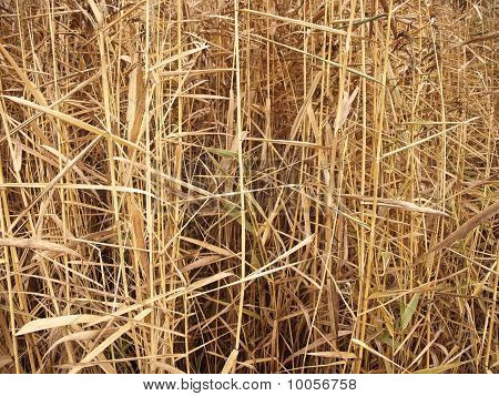 Fall grass background