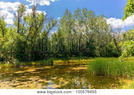 Landscape with bog in summer forest
