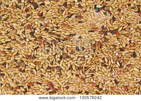 Pet food for birds. Seed mixture as background
