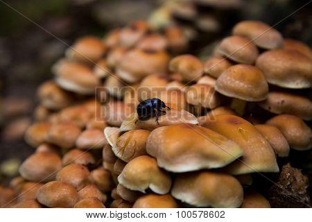 Beetle on Mushrooms