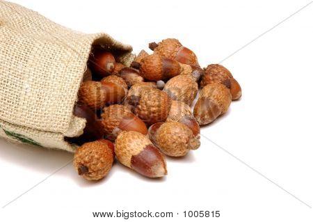 Acorn & Burlap Sack