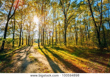Sunny Day In Autumn Sunny Forest Trees, Green Grass. Nature Wood